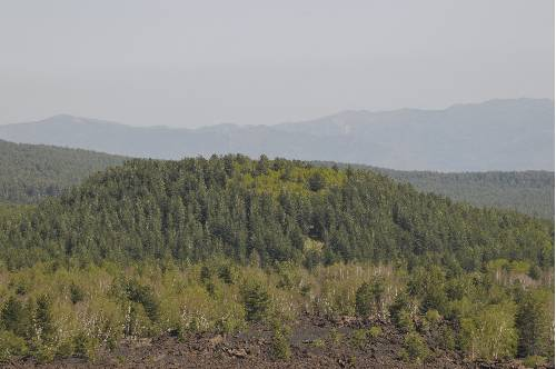 Stadi di vegetazione pioniera cronologicamente differenziati